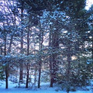 New England sun setting on the trees on their birthday eve