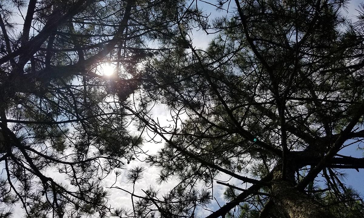 Sky behind trees